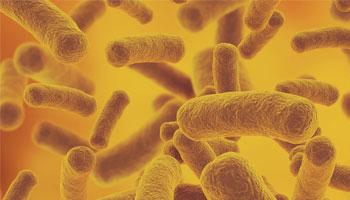 afvallen met darm bacteriën darmflora